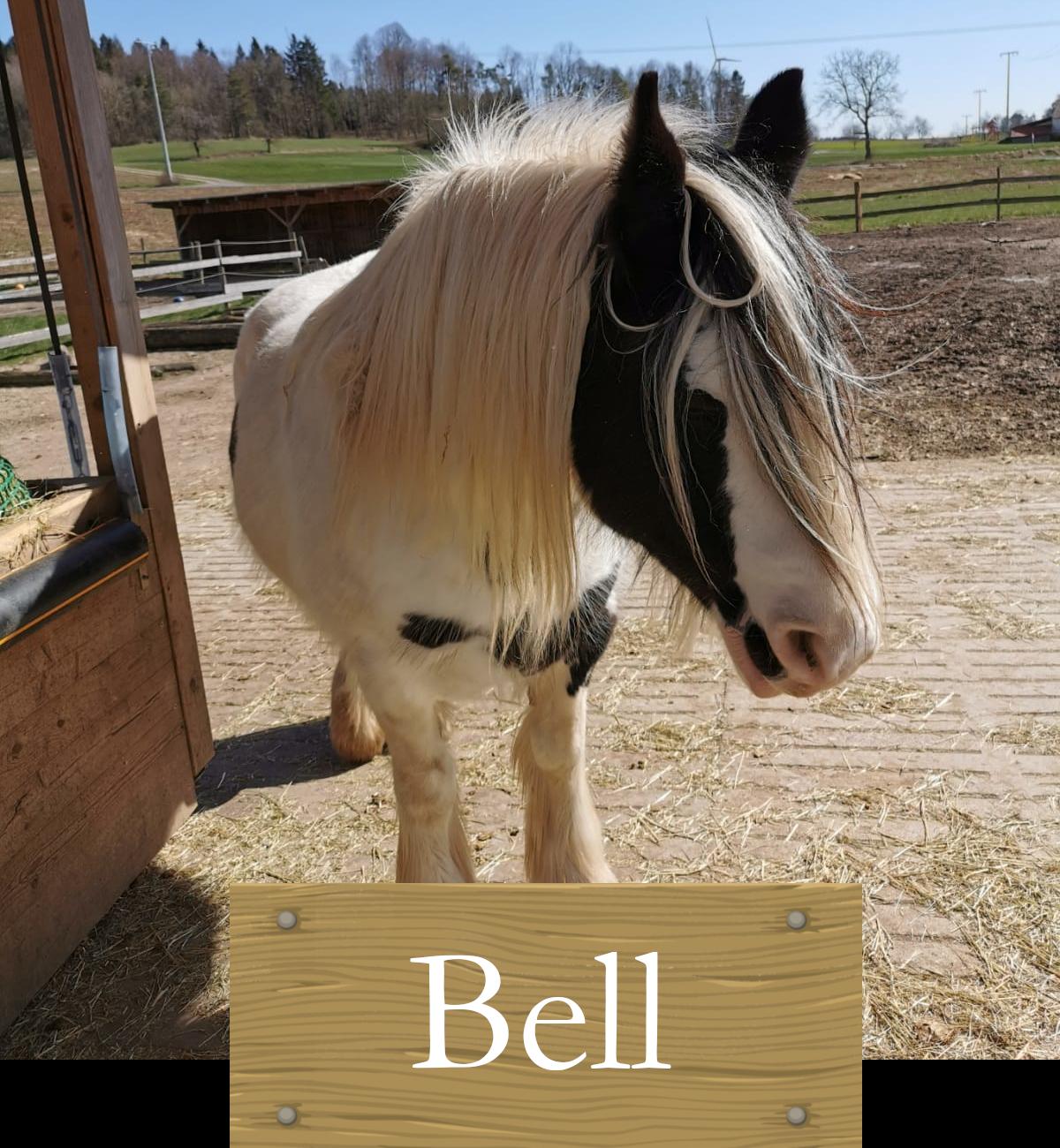 bell_weißesPferd_zugeschnitten_Schild1